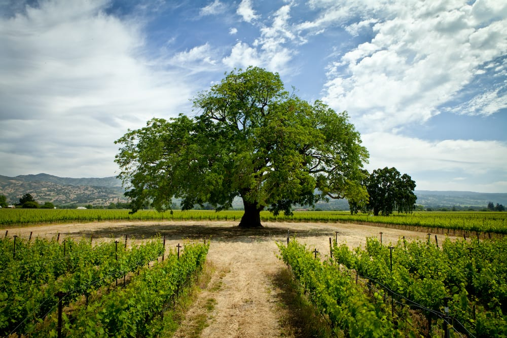 Dancing with the vine